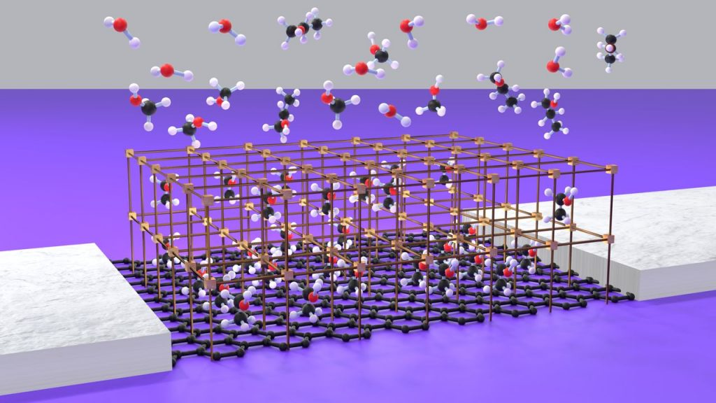 ie Sensoreinheit, bestehend aus einem Graphen-Feldeffekttransistor, auf den ein oberflächengebundenes metallorganisches Gerüst aufgewachsen ist. (Abbildung: Sandeep Kumar, KIT)